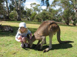 Kangaroo tea